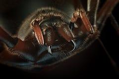 Reißzähne der haarigen Grafik der Spinne -3D Lizenzfreie Stockfotografie