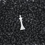 Rei branco em um mar dos penhores Fotos de Stock Royalty Free