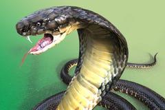 Rei Cobra Fotos de Stock Royalty Free