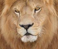 Rei coroado Imagem de Stock