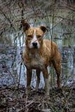 Rei da floresta do pântano Foto de Stock Royalty Free