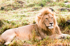 Rei de África imagem de stock royalty free