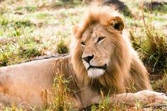 Rei de África imagem de stock