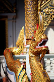 Rei de Nagas Chiang Mai, Tailândia 3 fotos de stock royalty free