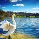 Rei do lago Imagens de Stock