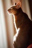 Rei dos gatos imagens de stock