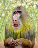 Rei ou fantasma da floresta Imagem de Stock Royalty Free