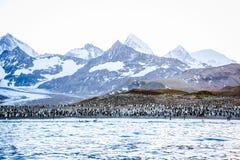 Rei Penguins na praia em St Andrews Bay - polar foto de stock royalty free