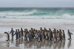 Rei pinguins - Ilhas Falkland Fotografia de Stock