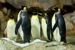 Rei pinguins (patagonicus do Aptenodytes) Fotografia de Stock Royalty Free