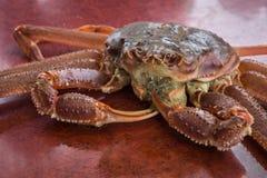 Rei vermelho Crab fotografia de stock