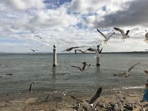 Reibt Fliegen auf Damm von Lissabon, Portugal ab Lizenzfreies Stockbild
