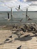 Reibt Fliegen an der Bucht ab Lizenzfreie Stockfotografie