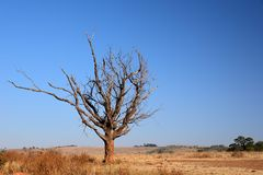 Reibungs-Baum Stockfotografie