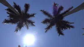 Reibungsfreie Kamerabewegung durch die Königpalmegasse bei West Palm Beach, Florida stock video
