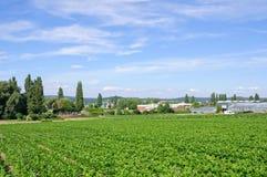 reichenau της Γερμανίας Στοκ εικόνες με δικαίωμα ελεύθερης χρήσης