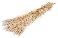 Reiches Getreide Lizenzfreies Stockbild
