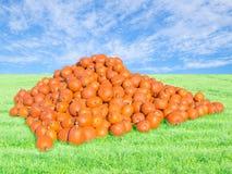 Reichliche Ernte auf Kürbisflecken stockfotografie
