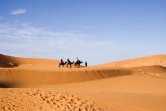 Reid de chameau Photographie stock