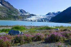 Reid Inlet i sommars nåd Fotografering för Bildbyråer