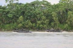 Reid Marines sul fiume Guaviarei fotografie stock libere da diritti