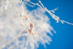 Reif auf den Bäumen im Winterwald Lizenzfreie Stockbilder