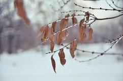 Reif auf den Bäumen im Winterwald lizenzfreies stockbild