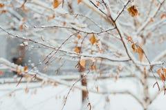 Reif auf einem Morgen des Birkenblattes im November Lizenzfreie Stockfotos