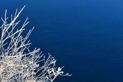 Reif auf Zweigen über Fluss Lizenzfreies Stockfoto