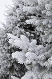 Reif bedeckte Tannenbaum Stockfotografie