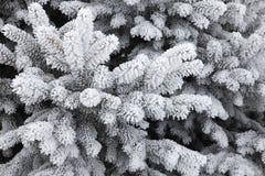 Reif bedeckte Tannenbaum Stockfoto
