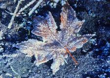 Reifbedecktes gefallenes Ahornblatt belichtet durch Sonnenlicht Lizenzfreie Stockfotografie