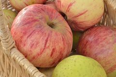 Reife Äpfel Stockfotografie
