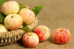 Reife Äpfel in einem schönen Weidenkorb Lizenzfreies Stockfoto