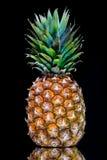 Reife Ananas mit Reflexion Stockbilder