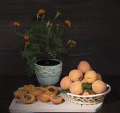 Reife Aprikosen und Blumen Lizenzfreies Stockbild