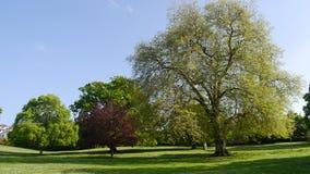 Reife Bäume in einem allgemeinen Park in England Stockfoto
