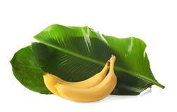 Reife Bananen und Grünblätter Lizenzfreie Stockbilder