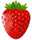 Reife Beere eine Erdbeere auf einem weißen backgrou Stockfoto