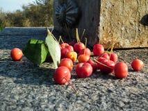 Reife Beeren der süßen Kirsche Lizenzfreie Stockbilder