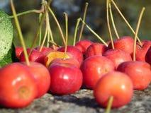 Reife Beeren der süßen Kirsche Stockfotos