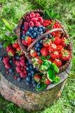 Reife Beeren im Garten lizenzfreies stockfoto