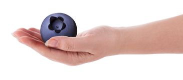 Reife Blaubeere an Hand lizenzfreies stockbild