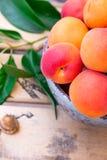 Reife bunte organische Aprikosen in der keramischen Schüssel auf hölzernem Fruchtkasten, Kern, grüne Blätter, Garten, Sommerernte Lizenzfreie Stockfotografie