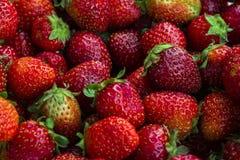 Reife Erdbeerbeeren Hintergrund Lizenzfreies Stockfoto