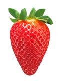 Reife Erdbeere Stockbilder