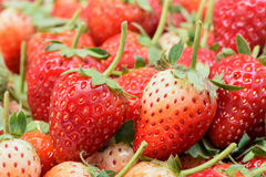 Reife Erdbeere der Nahaufnahme organisch Stockbilder