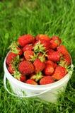 Reife Erdbeere im Eimer Stockbilder
