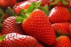 Reife Erdbeeren lizenzfreie stockbilder