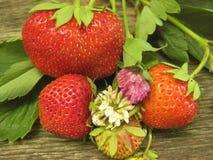 Reife Erdbeeren mit Blättern und Klee auf einem eichenen Tisch stockbild